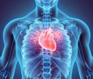 hart fysiosintmichielsgestel