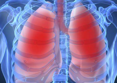 longen fysio sintmichielsgestel